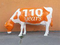 Holstein Friesian etend