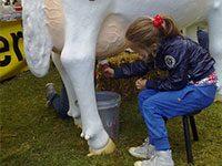 Melkkoe Holstein Friesian