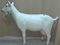 Milky Goat (height 110 cm)