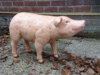 Piglet (height 45 cm)