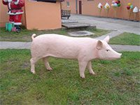 Sow / boar (height 75 cm)